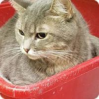 Adopt A Pet :: Lucy - Chandler, AZ