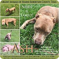 Adopt A Pet :: Ash - Hearne, TX