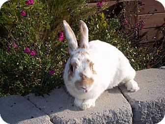 Other/Unknown Mix for adoption in Bonita, California - Fawn