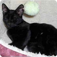 Adopt A Pet :: Baxter - Richmond, VA