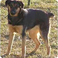 Adopt A Pet :: Raven - Swiftwater, PA