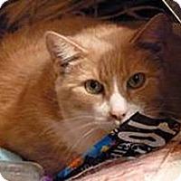Adopt A Pet :: Rikki Tiki and Tavi URGENT!!!! - bloomfield, NJ