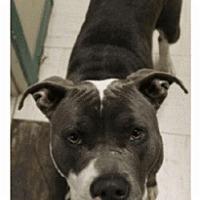 Adopt A Pet :: Bleaux - Geismar, LA