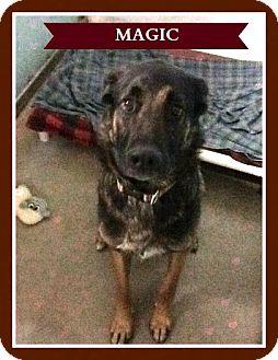 German Shepherd Dog Mix Dog for adoption in New Richmond,, Wisconsin - Magic