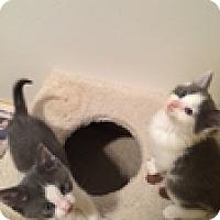 Adopt A Pet :: Jaspurr - Vancouver, BC