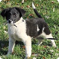Adopt A Pet :: Olin - Brattleboro, VT