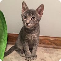 Adopt A Pet :: Teenie - Colmar, PA
