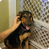 Adopt A Pet :: Gretchen - Richmond, KY