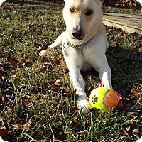 Adopt A Pet :: Sarge - Quincy, IN