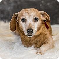 Adopt A Pet :: Rosie D3540 - Shakopee, MN