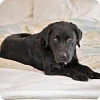 Adopt A Pet :: Raven - Barrington Hills, IL
