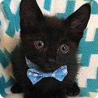 Adopt A Pet :: Dublin - Duluth, GA