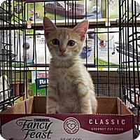 Adopt A Pet :: Verbal - Dallas, TX