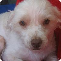 Adopt A Pet :: Blondie-WATCH MY VIDEO!!! - Irvine, CA