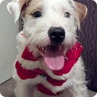 Adopt A Pet :: Diana in Houston - Houston, TX