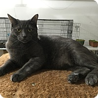 Adopt A Pet :: Prescott - Speonk, NY