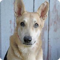 Adopt A Pet :: Prince - Inverness, FL