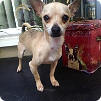 Adopt A Pet :: Frankie - Costa Mesa, CA