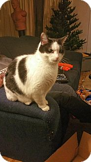 Domestic Mediumhair Cat for adoption in North Branch, Michigan - Moo