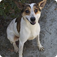 Adopt A Pet :: Jordan - Bishopville, SC