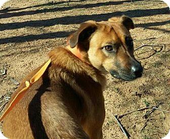 Shepherd (Unknown Type) Mix Dog for adoption in Weatherford, Oklahoma - Karma