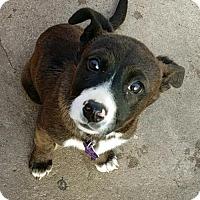 Adopt A Pet :: America - Littleton, CO