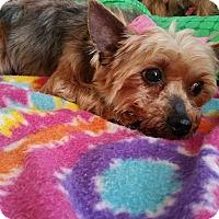 Adopt A Pet :: Rebecca - Crump, TN