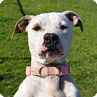 Adopt A Pet :: Dutchess - Ridgeland, SC