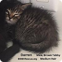 Adopt A Pet :: Darren - Temecula, CA