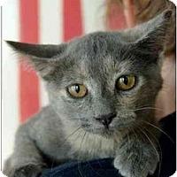 Adopt A Pet :: Jussie - Garland, TX