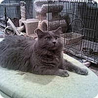Adopt A Pet :: Zander - Muncie, IN