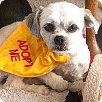 Adopt A Pet :: Lila - Fort Valley, GA
