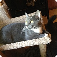 Adopt A Pet :: Boon - West Lafayette, IN