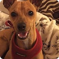 Adopt A Pet :: Rudy - Oceanside, CA
