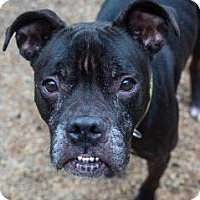 Adopt A Pet :: SPIRIT - Decatur, GA