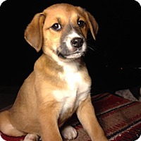 Adopt A Pet :: Callen - Russellville, KY