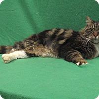 Adopt A Pet :: Emmerson - Redwood Falls, MN