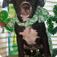 Adopt A Pet :: Isabella - Detroit, MI