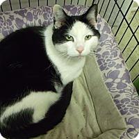 Adopt A Pet :: Skittles - Muskegon, MI