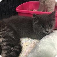 Adopt A Pet :: Jameson - Cerritos, CA