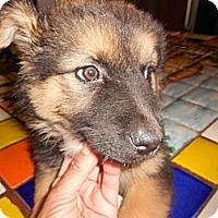 Adopt A Pet :: Liz - San Diego, CA