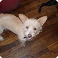 Adopt A Pet :: Tink - Atascadero, CA