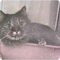 Adopt A Pet :: Grace - Lunenburg, MA