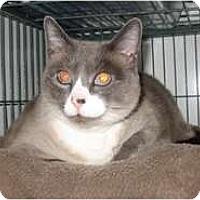 Adopt A Pet :: Fiona - Shelton, WA
