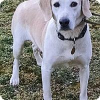 Adopt A Pet :: Queenie - Richmond, VA