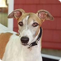 Adopt A Pet :: Hilco - Ware, MA