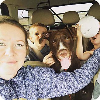 Labrador Retriever Mix Puppy for adoption in Salem, Oregon - Casey