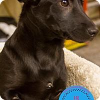Adopt A Pet :: Rowan - Staten Island, NY