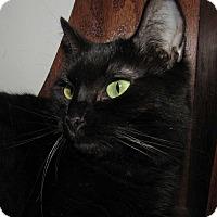 Adopt A Pet :: Myrhh - Norwich, NY