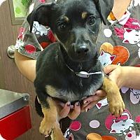 Adopt A Pet :: Angel - Brea, CA